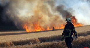 پرندهای که یک مزرعه را به آتش کشید! (+تصاویر)