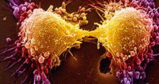استفاده از «تستوسترون» برای درمان موفقیت آمیز سرطان