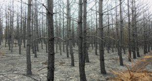 افزایش آسیب پذیری درختان در اثر آلودگی هوا