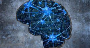 کشف تاثیر تغییر ترکیبات موجود در سلول مغز بر یادگیری و حافظه
