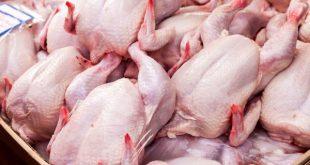 قیمت 7500 تومانی مرغ در میدان بهمن/ افزایش قیمت مرغ تا 9500 تومان در خرده فروشیها
