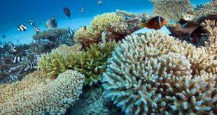 صخره های مرجانی چگونه هستند؟