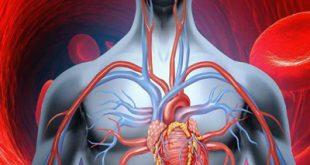 7 غذای گیاهی که خون تان را تصفیه می کنند!