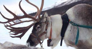 اطلاعات جالبی که یک کارمند باغ وحش درباره حیوانات می گوید