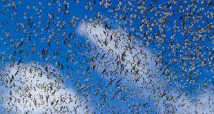 آشنایی با مهاجرت جانوران