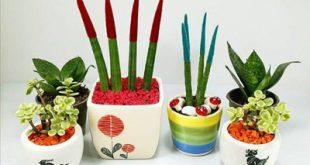 نکته هایی برای نگهداری از انواع گل های آپارتمانی