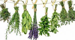 گیاهان دارویی برای کوچک کردن سینه ها