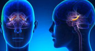 چگونه از مرگ تدریجی سلولهای مغز پیشگیری کنیم؟