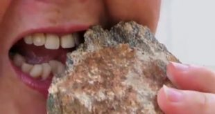ضرب المثل آدم گرسنه سنگ را هم میخورد