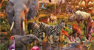 ۱۰ حیوان باهوش جهان را بشناسیم