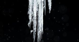 آناتومی قطب شمال (+تصاویر)