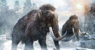 گونهای جدیدی از ماموت در سیبری کشف شد/عکس