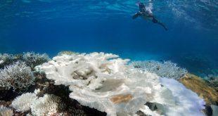 امواج گرمایی آب اقیانوس ها را داغ کرده است