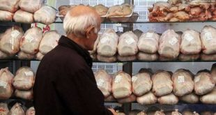 عرضه مرغ تنظیم بازاری؛ هر کیلو ۸۱۷۵تومان/بازار متعادل میشود