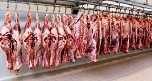 گوشت در عید قربان گران نمی شود/مردم برای خرید دام صف نکشند