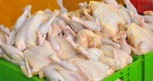 قیمت مرغ در آستانه 12 هزارتومانی شدن