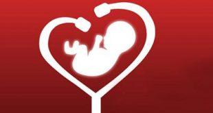 ضربان قلب نرمال جنین چند است؟