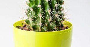 گیاهان متناسب با شخصیت متولد هر ماه چیست؟