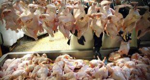 کاهش تقاضا، مرغ را ارزان کرد