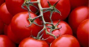 گوجه فرنگی ۷ هزار تومان شد