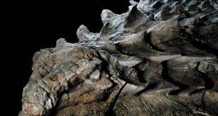 کشف دایناسور ۱۳۰ میلیون ساله در چین