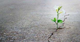 جملات امیدبخشی که زندگی شما را تغییر میدهد