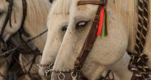 آشنایی با مشکلات روانی در اسب