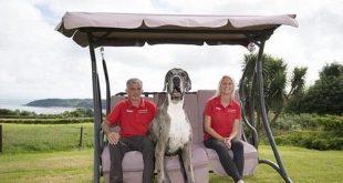 بزرگترین سگ دنیا(+تصاویر)
