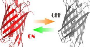 ساخت پروتئین هایی که با نور کنترل می شوند
