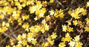 گل های بهاری که باید در فصل پاییز کاشته شود