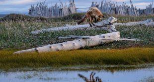 برندگان مسابقه عکاسی از گیاهان و جانداران نادر جهان/ تصاویر