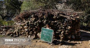 بچههای عشایر در حسرت مدرسه (+تصاویر)