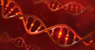 پیشگیری از چاقی با ویرایش ژن