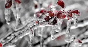 ایمان بیاوریم به آغاز فصل سرد (فروغ فرخزاد)