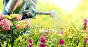 نکته هایی برای نگهداری از گل های آپارتمانی