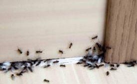 دفع حشرات خانگی