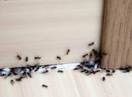 Photo of نابود کردن حشرات خانگی با این ترفندهای آسان