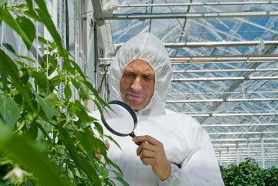 مهندسی گیاهان چیست؟