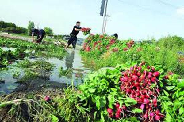 فاجعه بیخ گوش پایتخت: سبزیجات جنوب تهران با مواد نفتی آبیاری میشود