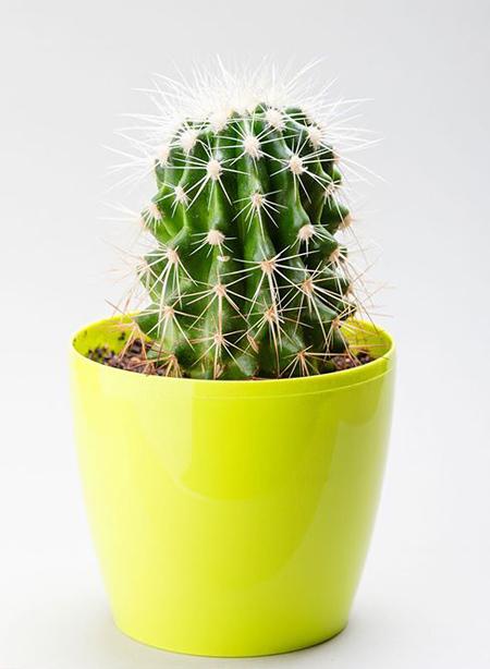plants2-every2-month1.jpg