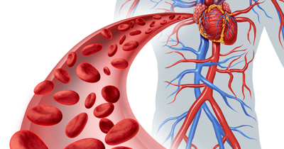 increase-blood-regular1-1.jpg
