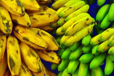 plantin-banana1-1.jpg