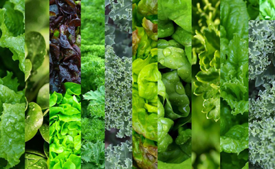 vegetable-green-rich1-4.jpg