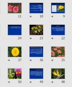 """پاورپوینت """"موضوع سمینار: گلهای نشایی"""