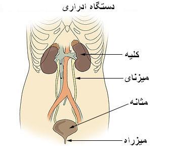 مشکلات مثانه