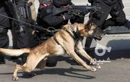 سگ پلیس