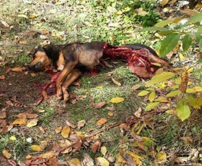 Photo of زیباترین فیلم حملات حیوانات در دنیای حیات وحش