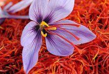 قیمت بهترین زعفران ایران